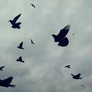 birds-cco.jpg